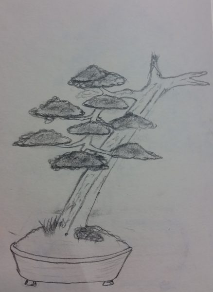 Szkic docelowego bonsai z tego jałowca