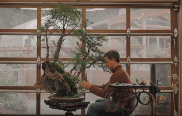 przycinanie-drutowanie-bonsai