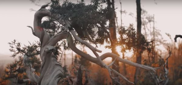 Sztuka formowania drzewek bonsai
