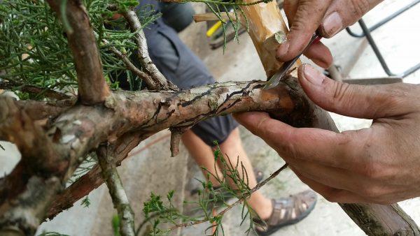 Rysowanie linii liścia na gałęzu