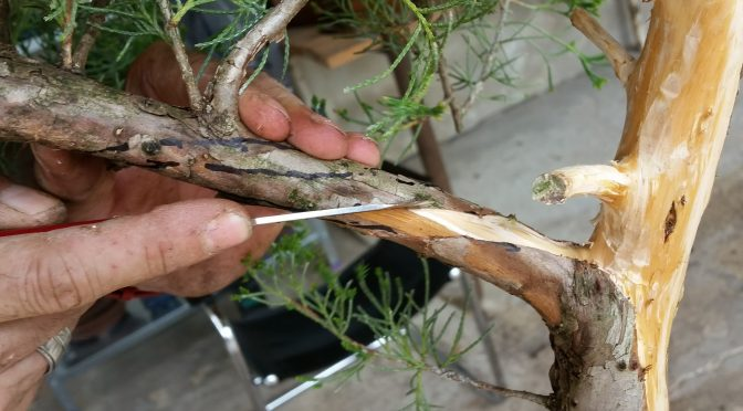 Technika robienia martwego drewna – linia życia