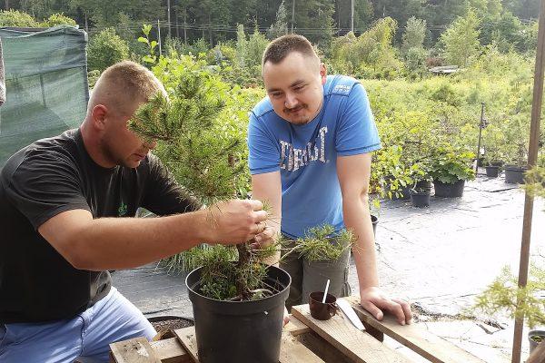 3-spotkanie-klubu-bonsai-poznan-w-sulecinie-09172016-1