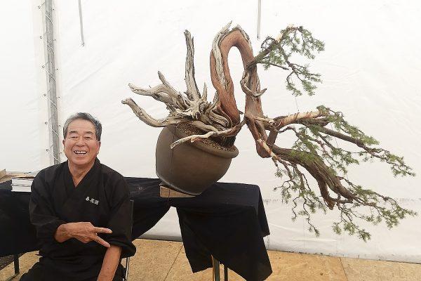 Jałowiec uformowany przez Mistrza Kobayashiego - smagana wiatrem kaskada.
