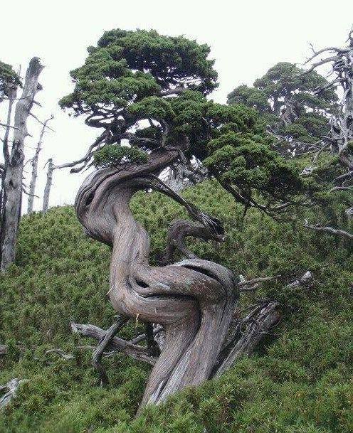 inspiracja-do-tworzenia-bonsai-z-natury
