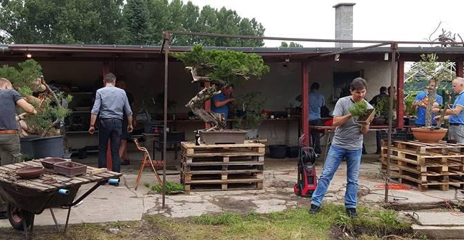 Jesienne warsztaty bonsai w Sulęcinie (17.09.2016)