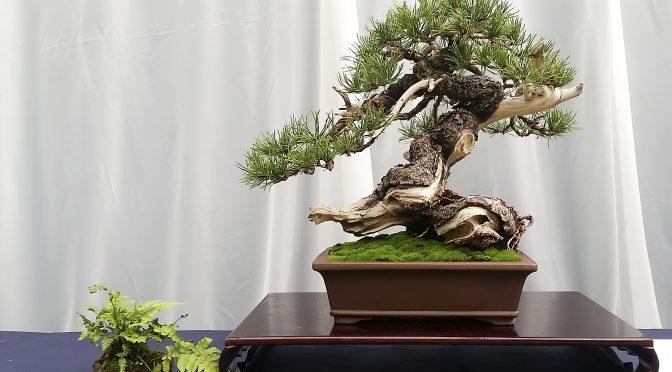 Fotorelacja z wystawy bonsai w Łodzi (30.09 – 02.10.2016)