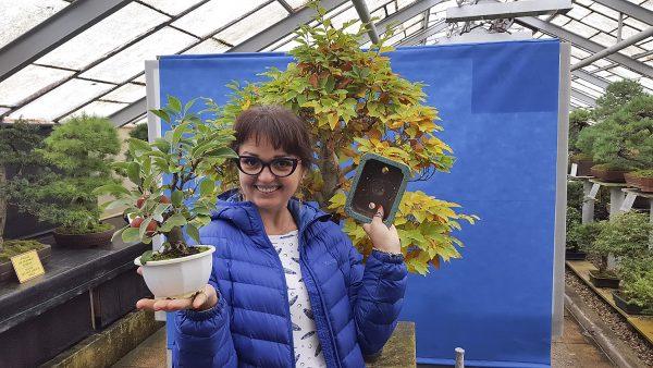 bonsai-piotr-czerniachowski-akina-walbrzych-palmiarnia-10102016-002