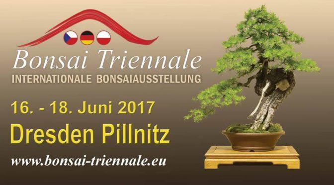 Triennale bonsai w Dreźnie 16-18. czerwiec 2017