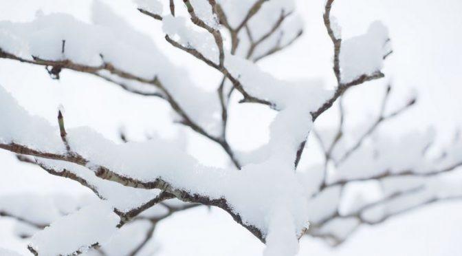 Zimowanie bonsai – dołowanie w gruncie
