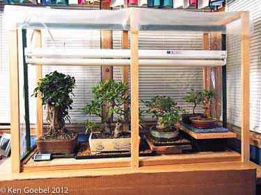 """Zimowanie drzewek typu indoor, czyli tzw. """"domowych"""" bonsai"""