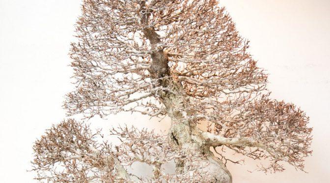 Wystawy bonsai w Japonii