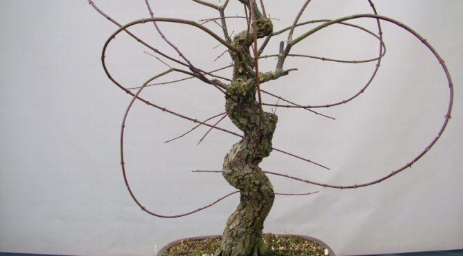 Jak uzupełnić gałąź i korzenie? Szczepienie przez przewiercenie