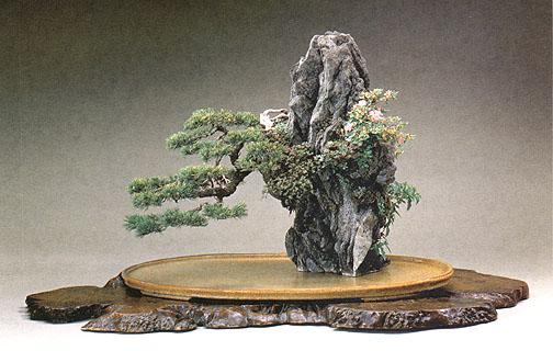 Uprawa bonsai na skale lub kamieniu