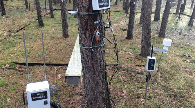 Tweetujące drzewa