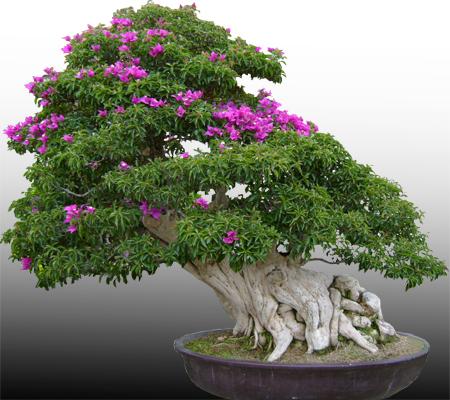 Azalia w stylu moyogi (pochylonym)