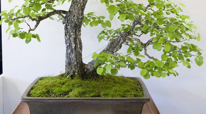 Alternatywne do Biogoldu rodzime nawozy naturalne na wiosnę i lato