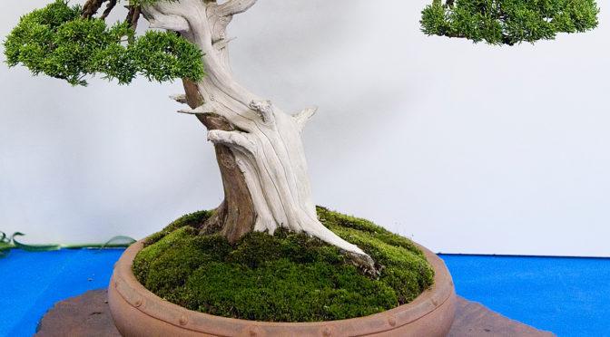 Mech w bonsai