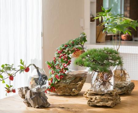 """Hydroponiczna uprawa bonsai, eksperyment z """"mizusai"""""""