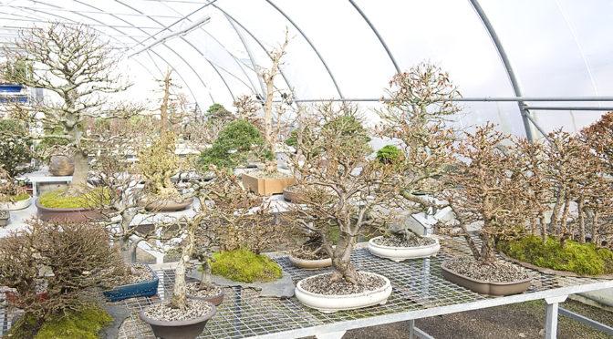 Z wizytą w szkółce bonsai w Enger