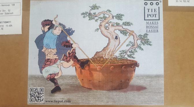 Tiepot – nowy typ doniczki treningowej do bonsai
