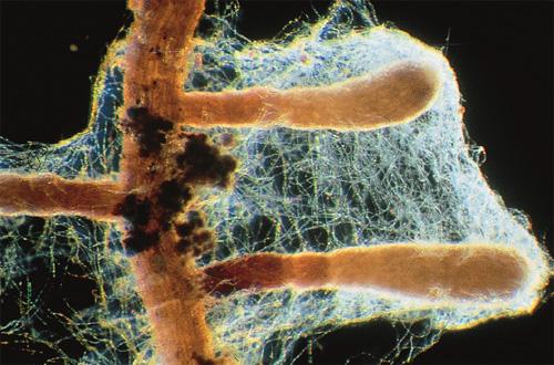 Tajemnice mikoryzy