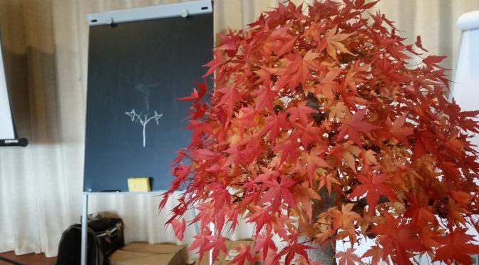 Specjalistyczne szkolenie z prowadzenia klonów jako bonsai