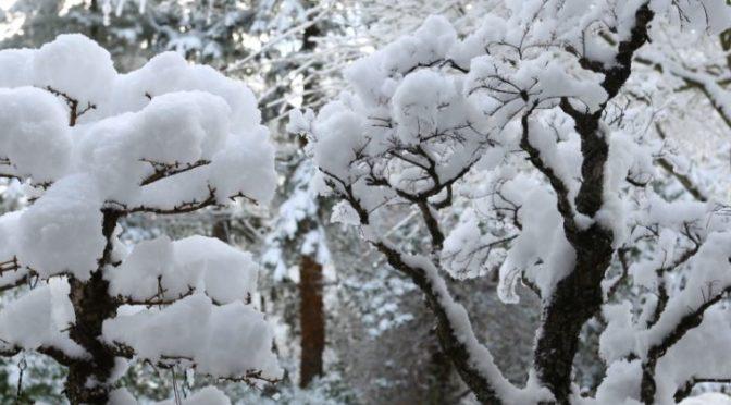 Jak zimować drzewka bonsai w temperaturze lekko powyżej zera ?