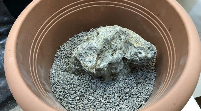 Ishizuke – jak osadzić drzewko na skale