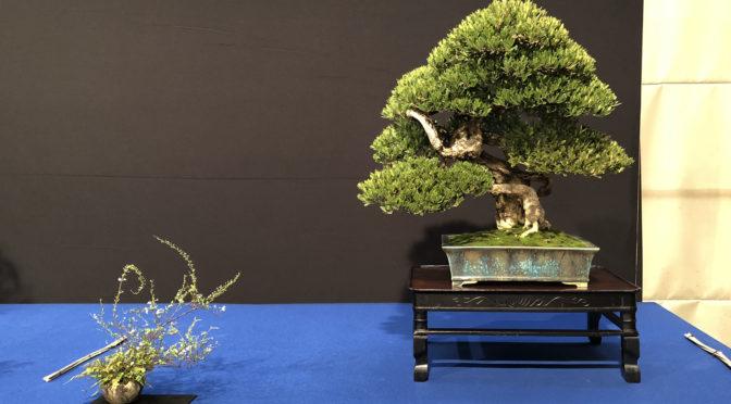 Zasady prezentacji kusamono lub shitakusa