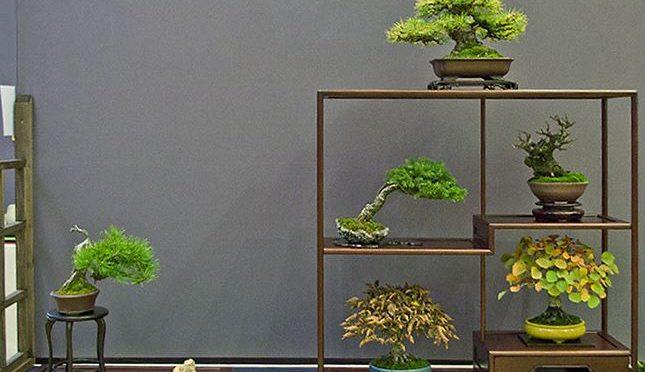 Zasady prezentacji drzewek shohin na regale