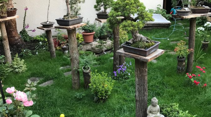 Mój własny ogród bonsai